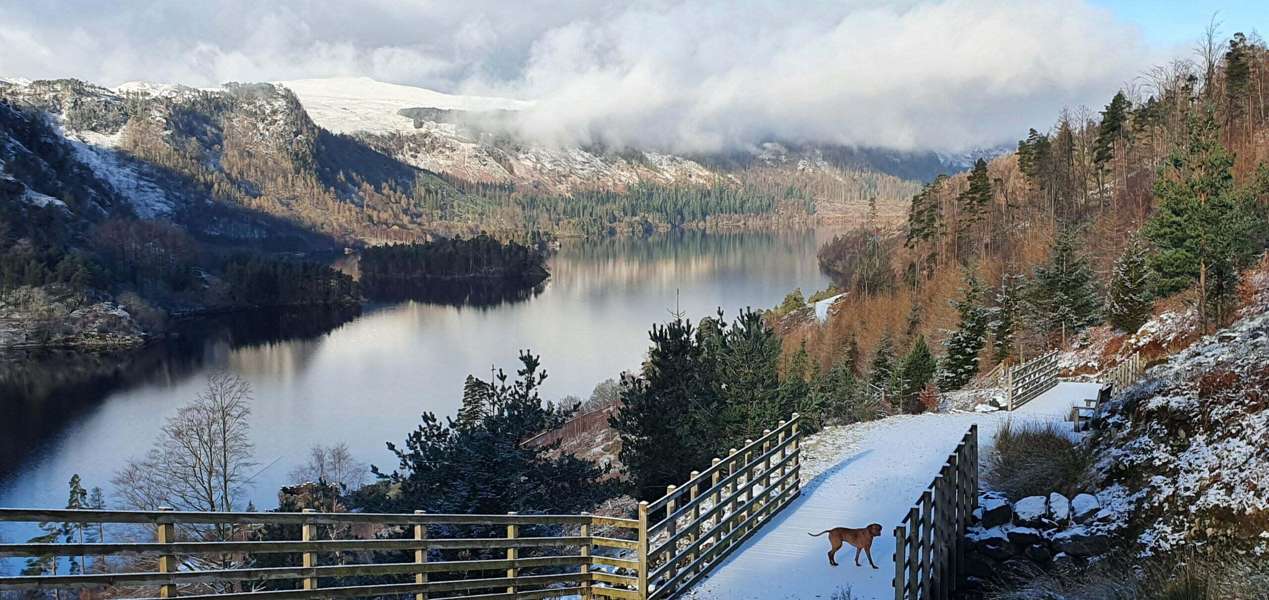 Thirlmere forestry track snow vizsla